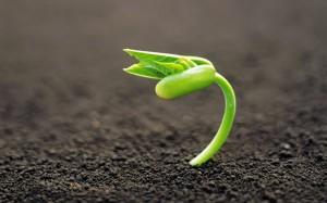 preserve-seedlings