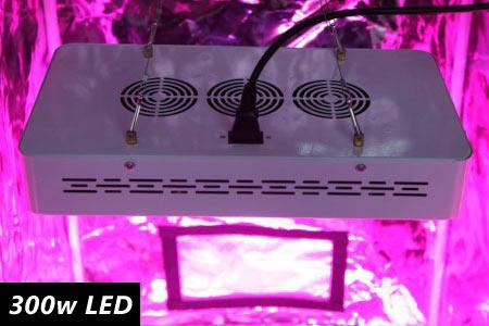 300w Led Grow Lights On