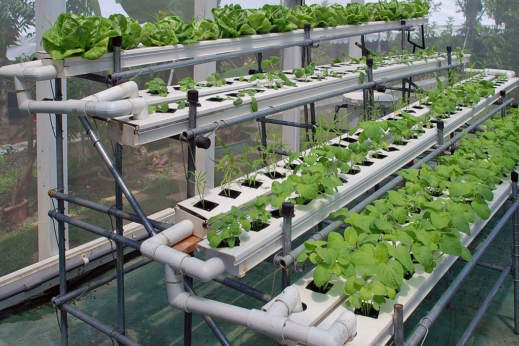 Hydroponics Techniques And Systems