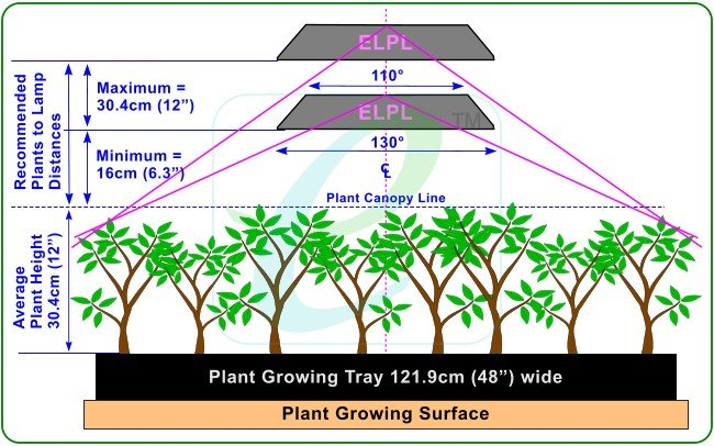 What distance should my grow light be from my plants?