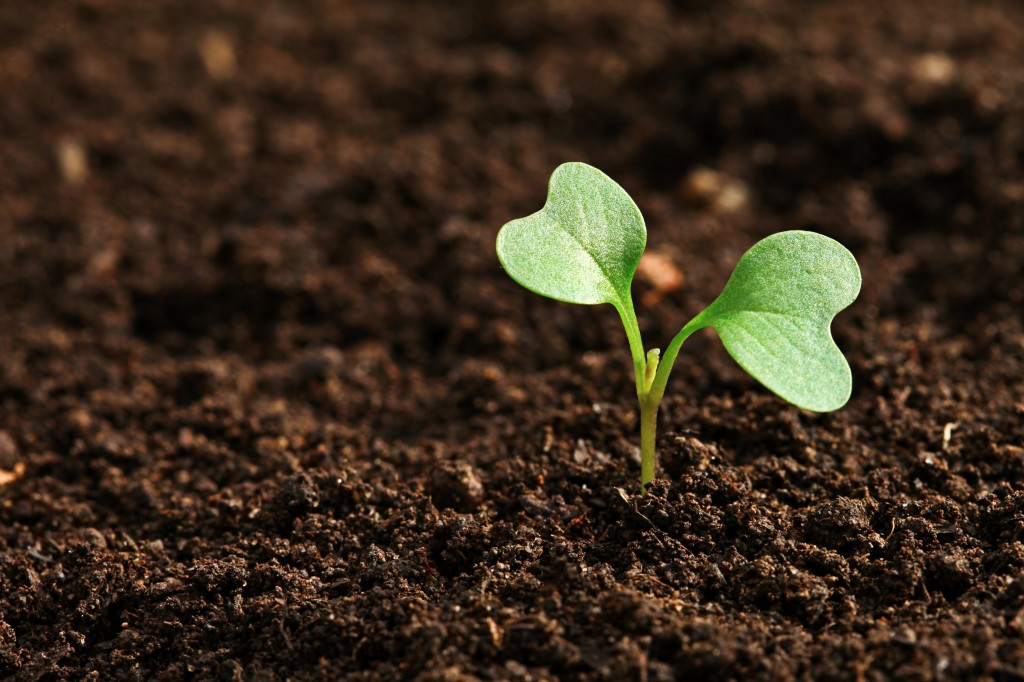 the best ways to start plants from seeds