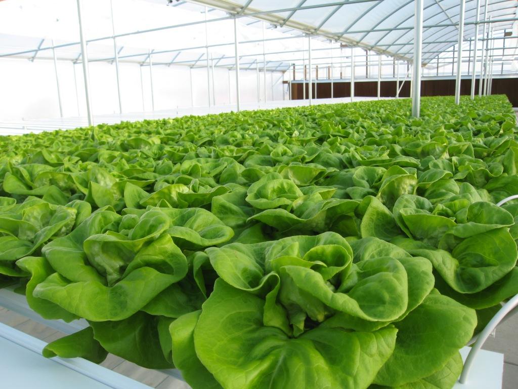 hydroponics-methods